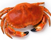 CRAB COOKED 400/600 PRICE / PZA